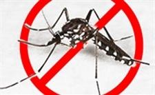 Recomanacions per a evitar la propagació del mosquit-tigre