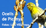 fotogaleria_ocells_de_picanya