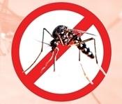 Nova campanya de prevenció de la propagació del mosquit tigre
