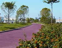 Carril bici Av. Sanchis Guarner - 001