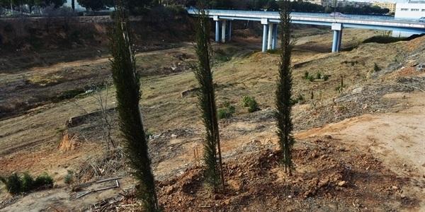 Projecte de regeneració  de riberes en el barranc