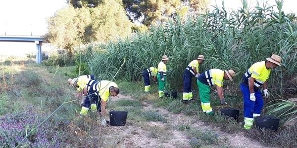 Contractació de persones aturades del sector agrícola per a la neteja del barranc