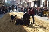 Festa Sant Antoni 2012 P1157895